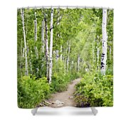Aspen Path Impasto Shower Curtain
