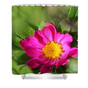 Aster From The Daylight Mix Shower Curtain
