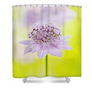 Astrantia 'larch Cottage' Shower Curtain