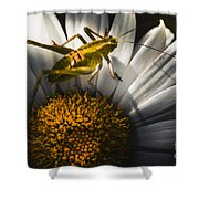 Australian Grasshopper On Flowers. Spring Concept Shower Curtain