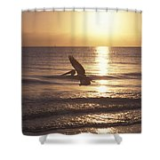 Australian Pelican Glides At Sunrise Shower Curtain