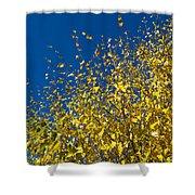 Autumn Blue Sky Shower Curtain