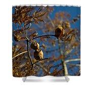 Autumn Coniferous Shower Curtain