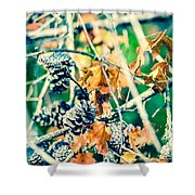 Autumn Leaves And Pinecone Background Shower Curtain