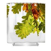 Autumn Oak Leaves Shower Curtain