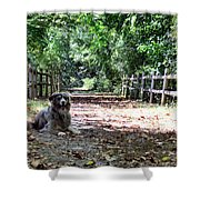 Autumn Slumber Shower Curtain
