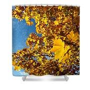 Autumn Splendor 9 Shower Curtain