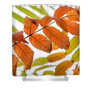 Autumn Upshot Shower Curtain