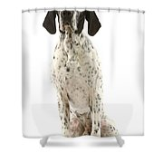 Auvergne Pointer Shower Curtain