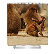 Baboon Family In The Desert Shower Curtain