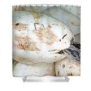 Baby Black Rat Snake Shower Curtain