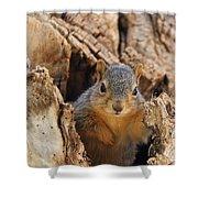 Baby Fox Squirrel Shower Curtain