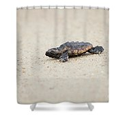 Baby Loggerhead Sea Turtle Amelia Island Florida Shower Curtain