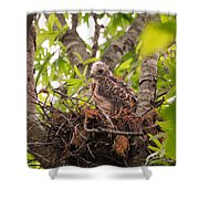 Baby Red Shouldered Hawk Shower Curtain
