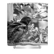 Baby Robin - Revving Up  Shower Curtain