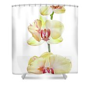 Backlit Orchids Against White Background Shower Curtain