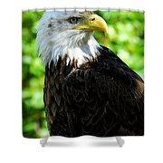 Bald Eagle - Alaska Shower Curtain