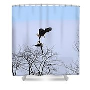 Bald Eagle Courtship Ritual  1338 Shower Curtain