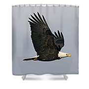 Bald Eagle In Flight Shower Curtain