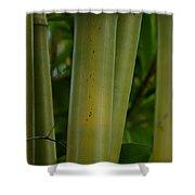 Bamboo II Shower Curtain