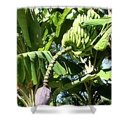 Banana Tree Shower Curtain