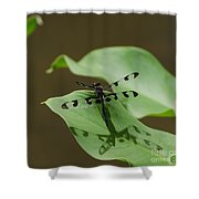 Banded Pennant Dragonfly Shower Curtain