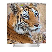 Bandhavgarh Tigeress Shower Curtain