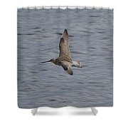 Bar-tailed Godwit Shower Curtain
