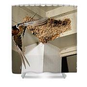 Barn Swallow Shower Curtain by Scott Linstead