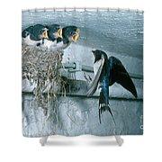 Barn Swallows Shower Curtain