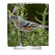 Bay-breasted Warbler Shower Curtain