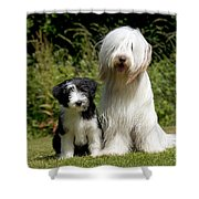 Bearded Collie And Puppy Shower Curtain