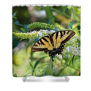 Beautiful Butterfly Pollination Shower Curtain