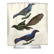 Beautiful Foreign Birds Shower Curtain