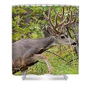 Beautiful Mule Deer Buck With Velvet Antler  Shower Curtain