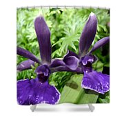 Beautiful Orchid Flower  Shower Curtain