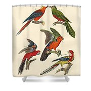 Beautiful Parrots Shower Curtain