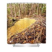 Beaver Dam In Fall Colored Forest Wetland Swamp Shower Curtain