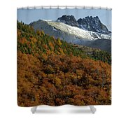 Beech Forest, Chile Shower Curtain