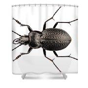 Beetle Species Carabus Coriaceus Shower Curtain