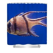 Bengal Cardinal Fish Shower Curtain
