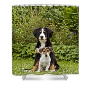 Bernese Mountain & Jack Russell Puppies Shower Curtain