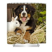 Bernese Mountain Puppy And Rabbit Shower Curtain
