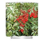 Berry Bush Shower Curtain