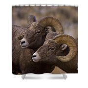 Big Horn Rams   #4664 Shower Curtain