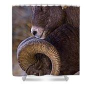 Big Horn Rams   #4732 Shower Curtain