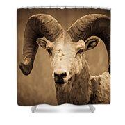 Big Horned Ram Shower Curtain