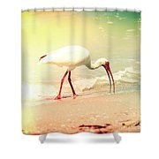Bird Breakfast Shower Curtain