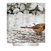 Bird In Winter Shower Curtain