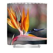 Bird Of Paradise  Shower Curtain by Gunter Nezhoda